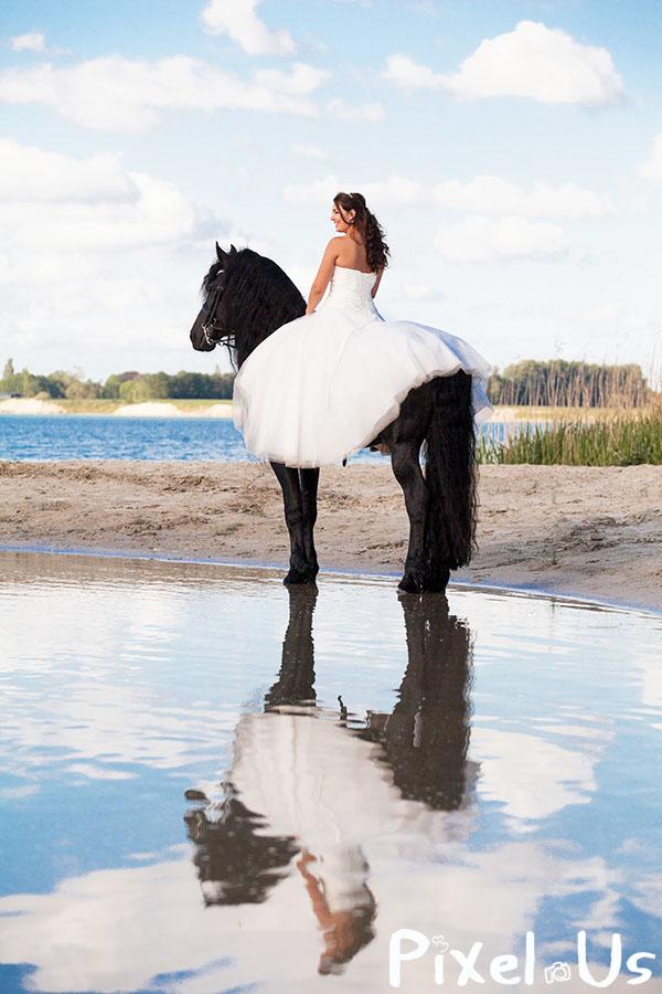 Bruid te paard in trouwjurk, Fries Paard, hengst, water